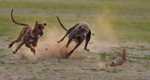 Wildlife Animals Photo Gallery #1   Third Monk image 5