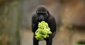 Amazing Animal Journalism Photos Collection 2011 (Gallery) | Third Monk image 6