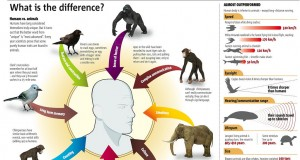 The Differences Between Humans And Other Animals (Infographic) | Third Monk