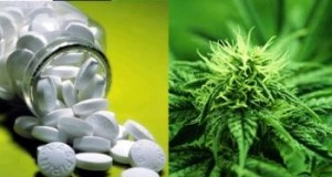 Deaths from Marijuana Vs 17 FDA Approved Pill Drugs (Study) | Third Monk
