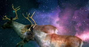 Reindeers Crave Magic Mushrooms (Video) | Third Monk