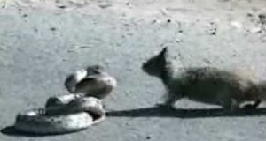 Squirrel with Balls of Steel Trolls a Snake (Video) | Third Monk
