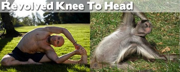 Funny Animal Yoga Instructors AddThis Sharing Buttons