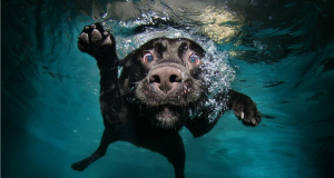 Funny High Speed Images of Dog Faces and Water (Photo Gallery)   Third Monk image 4