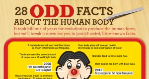 28 Odd Facts About the Human Body (Infographic) | Third Monk