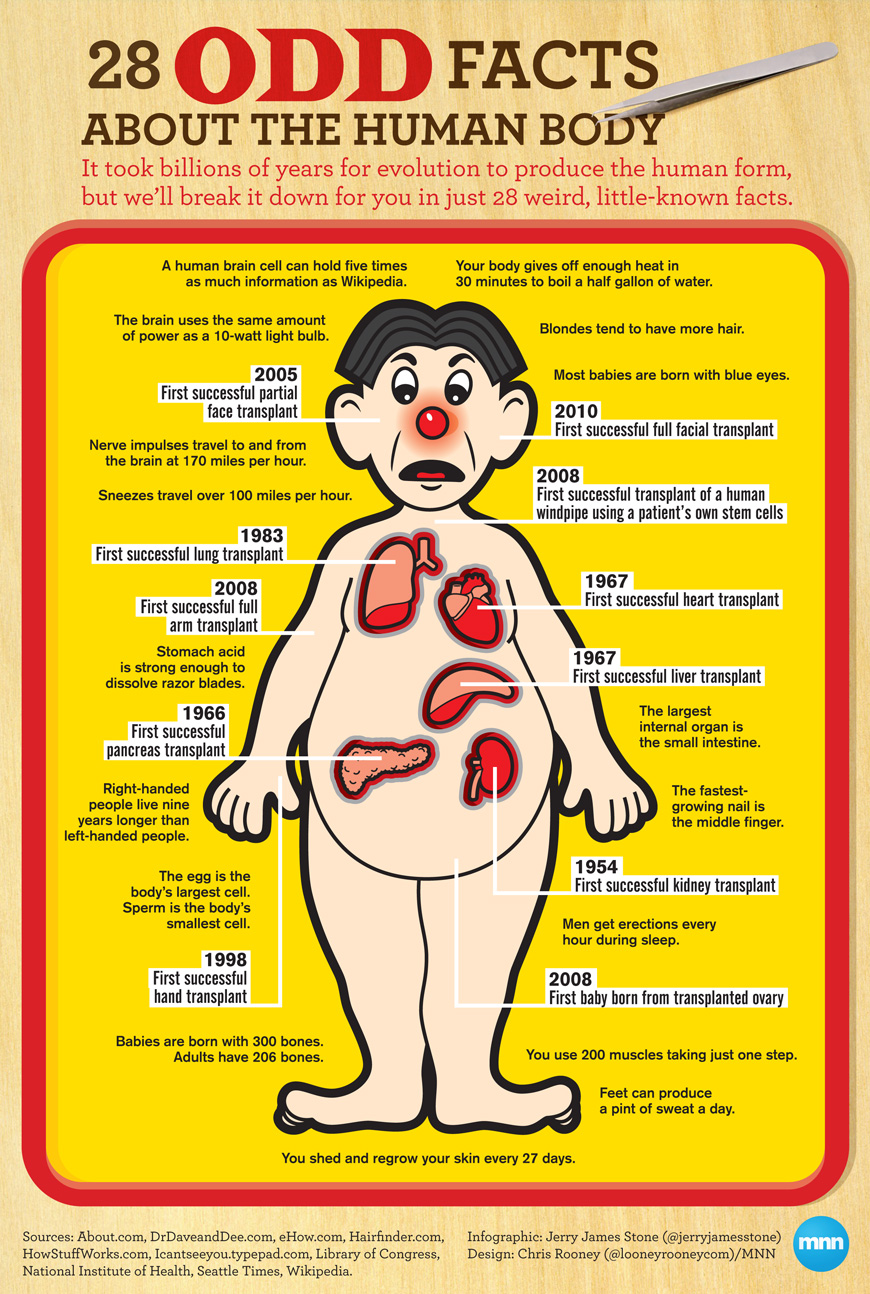 Odd Human Body Facts - Infographic