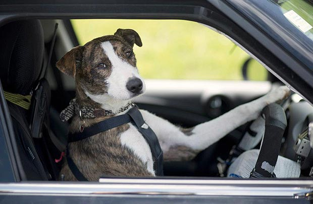 Rescue Dogs Trained to Drive Cars (Video) | Third Monk