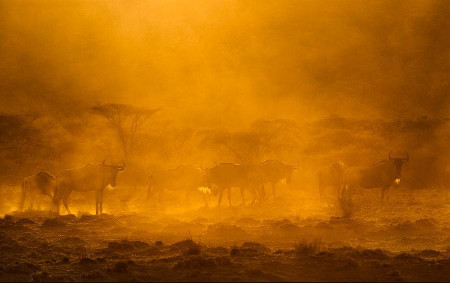 animal-sunset-photo-gallery-1