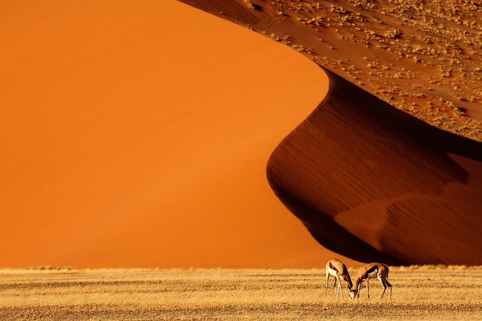 animal-sunset-photo-gallery-2