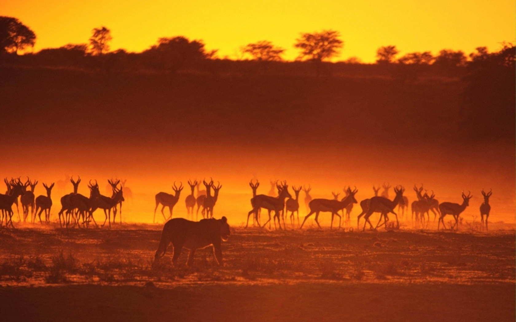 animal-sunset-photo-gallery-4
