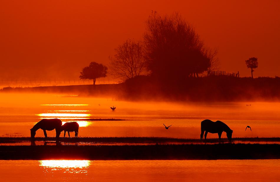 Animals Illuminated by Sunset (Photo Gallery) - Karma Jello Orange Jello