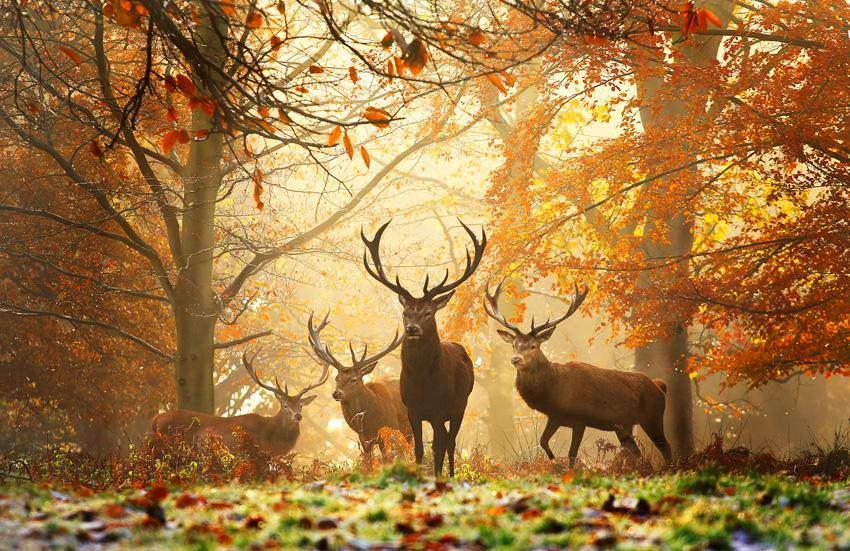 animal-sunset-photo-gallery-8