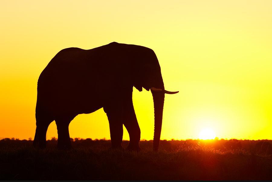 animal-sunset-photo-gallery-elephant