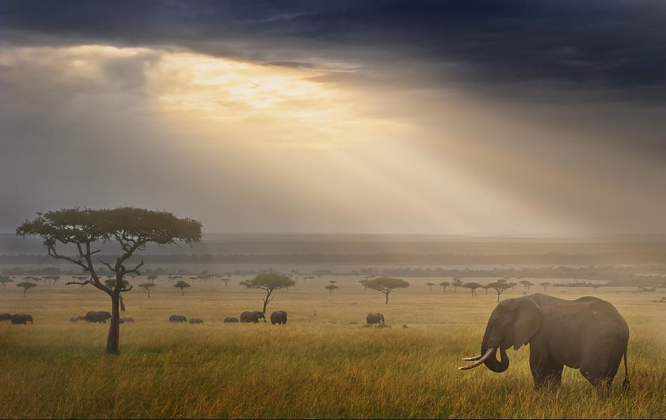 animal-sunset-photo-gallery-elephant2