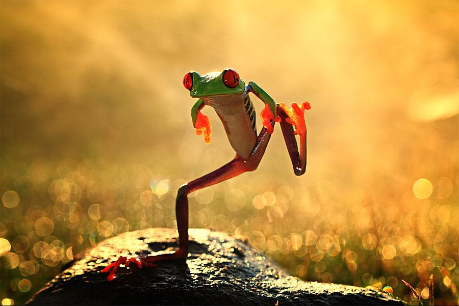 animal-sunset-photo-gallery-frog