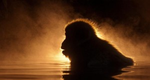 Animals Illuminated by Sunset (Photo Gallery) | Third Monk image 13