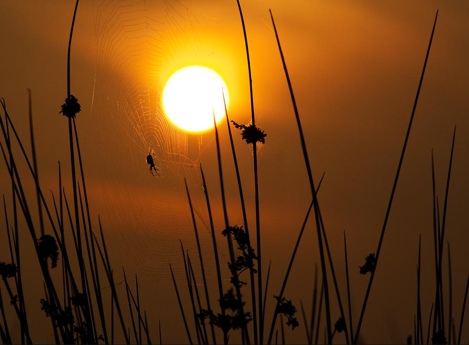 animal-sunset-photo-gallery-spider