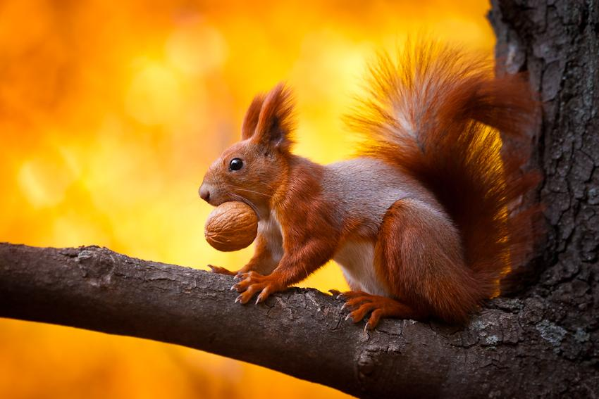 animal-sunset-photo-gallery-squirrel