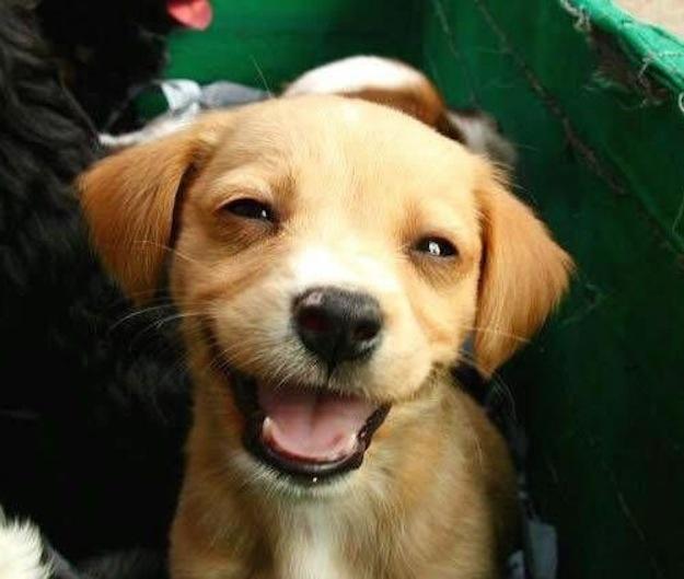 stoner-dogs-photo-gallery-7