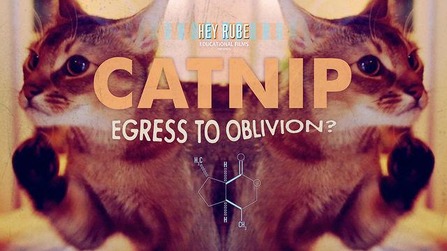 Catnip: Egress to Oblivion, Psychedelic Cats Short Film (Video)   Third Monk