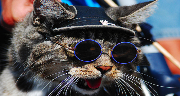 funny-animals-with-glasses-gallery-cat-biker