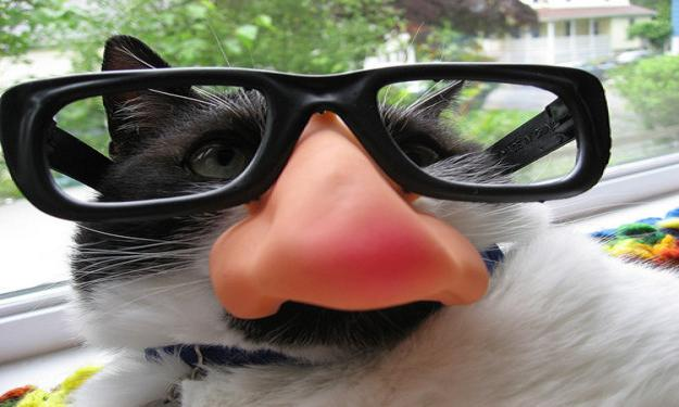 funny-animals-with-glasses-gallery-cat-nerd