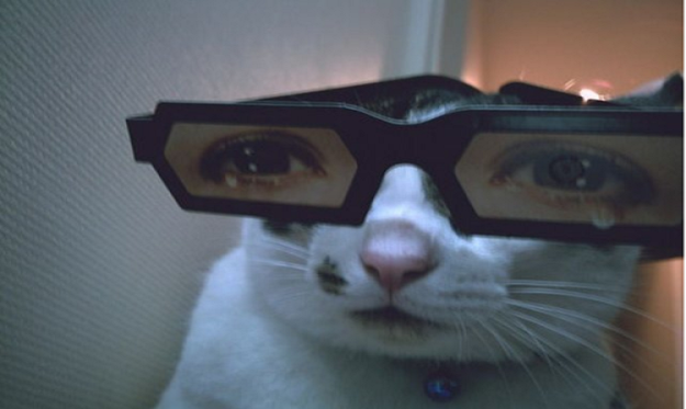 funny-animals-with-glasses-gallery-cat-trippy