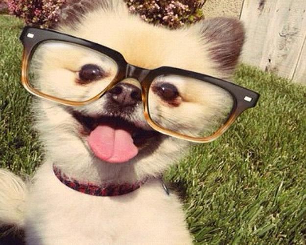 funny-animals-with-glasses-gallery-dog-2