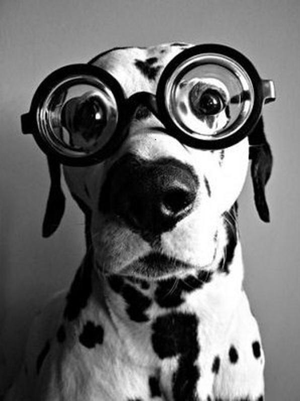 funny-animals-with-glasses-gallery-dog-4