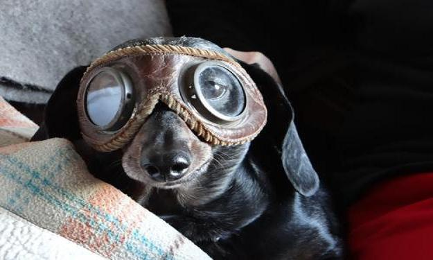 funny-animals-with-glasses-gallery-dog-aviator