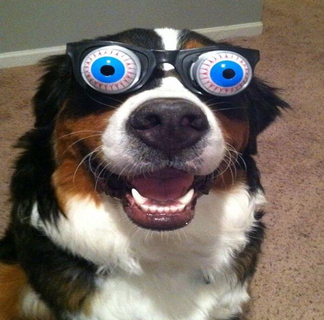 funny-animals-with-glasses-gallery-dog-crazy-eyes