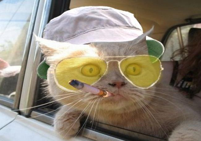 funny-animals-with-glasses-gallery-hunter-s-thompson-cat
