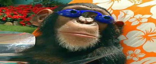 funny-animals-with-glasses-gallery-monkey-googles