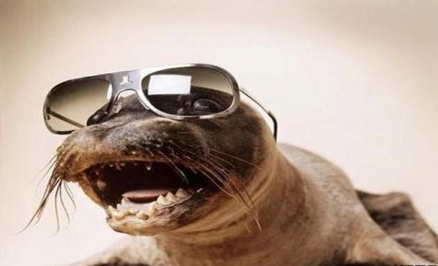 funny-animals-with-glasses-gallery-sea-lion