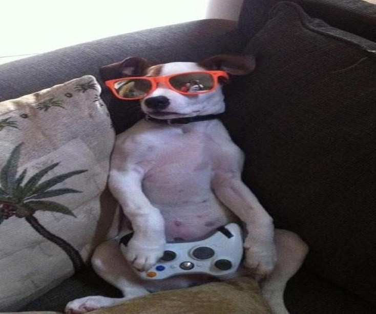 funny-animals-with-glasses-gallery-stoned-dog