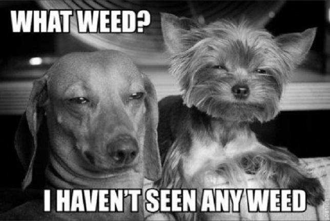 stoner-weed-meme-stoned-dogs