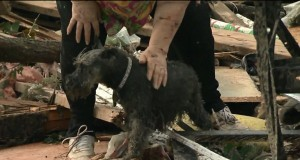Tornado Survivor Finds Dog Among Rubble During Interview (Video) | Third Monk image 3