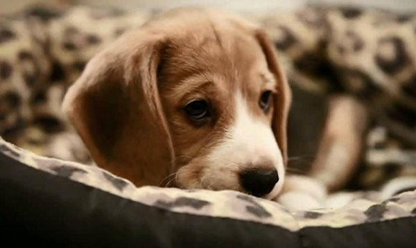 sad-dog-diary-beagle