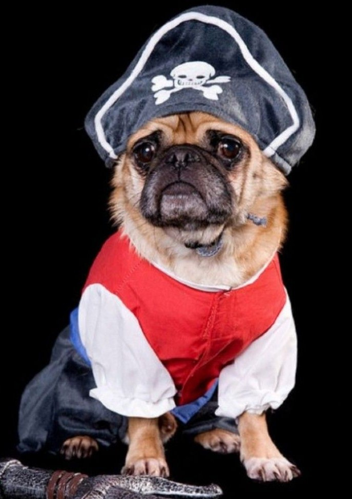 sad-dog-diary-pirate-pug