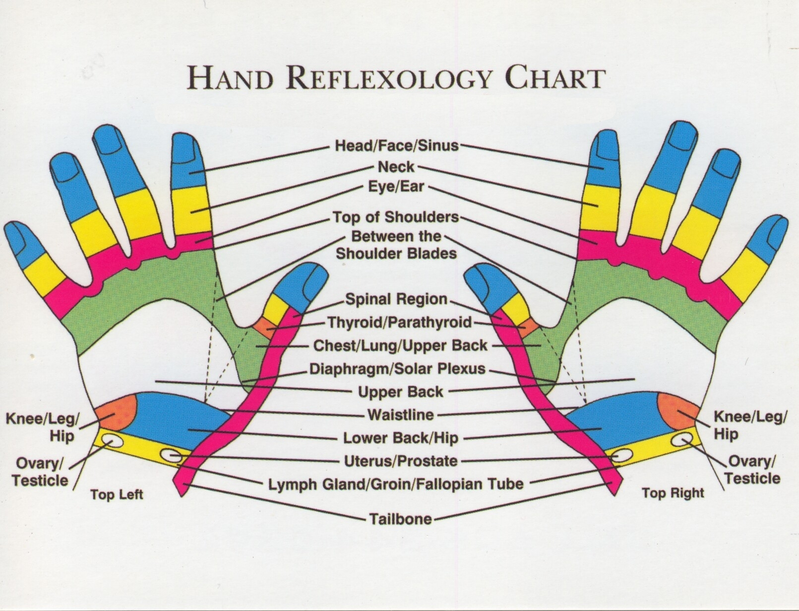 Does Pressure Point Therapy, Reflexology Really Work. Purple Heart Of Houston Locksmiths In Phoenix. Divorce Lawyers Orlando Florida. Tankless Water Heater Vs Conventional. Military Intelligence University. Occupational Therapy Schools In Oklahoma. Personal Financial Management Course. Web Marketing Specialist Articles On Security. Blue Cross Blue Shield Supplemental Plans