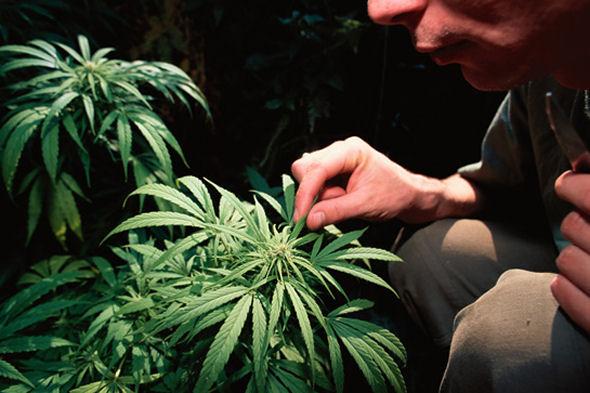 suppressed-inventions-marijuana-cancer-cure