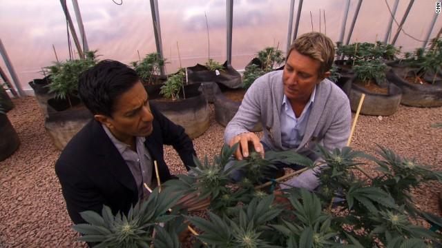 Dr. Sanjay Gupta weed