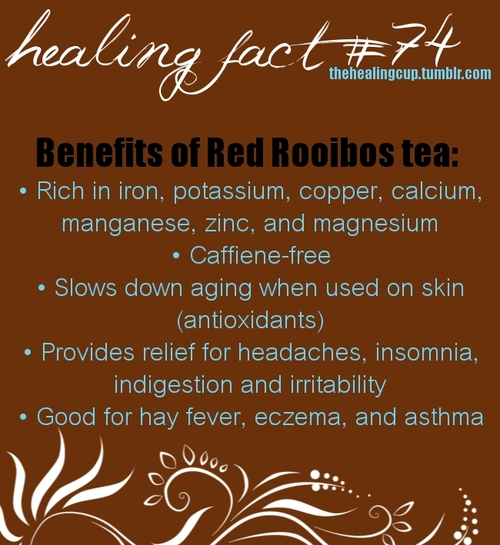 Benefits of Drinking Tea - Rooibus Benefits
