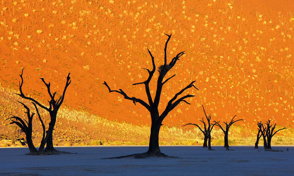This is not a painting, dead trees park, Namibia. Photo by: Frank Krahmer