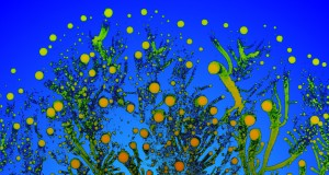 Psychedelic Fractals Formed By Bacteria Colonies, Art Gallery | Third Monk image 7