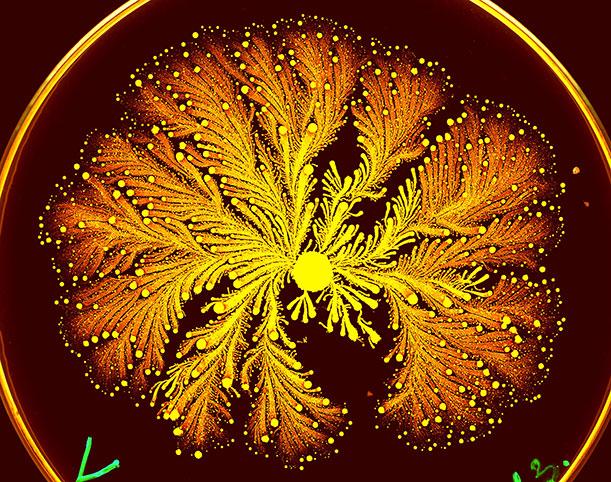 bacteria-psychedelic-ben-jacob-art4