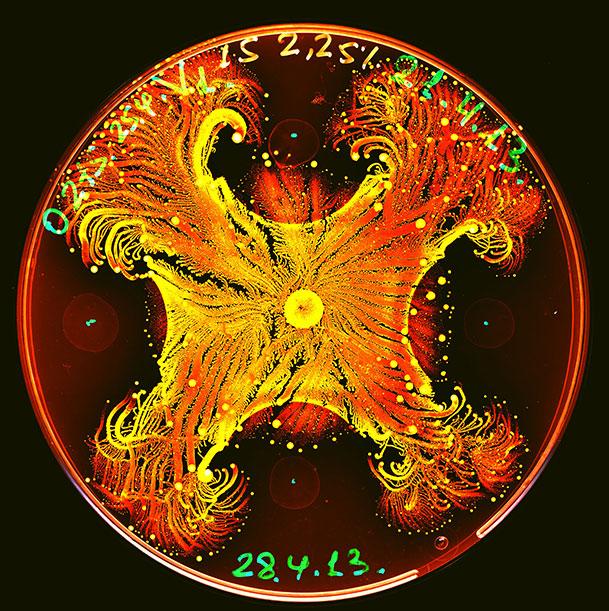 bacteria-psychedelic-ben-jacob-art7