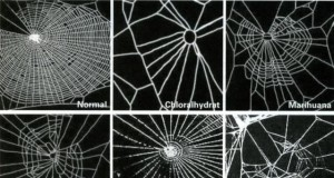 Spiders on Drugs - How Do Different Drugs Affect Their Webs? (Study) | Third Monk image 8