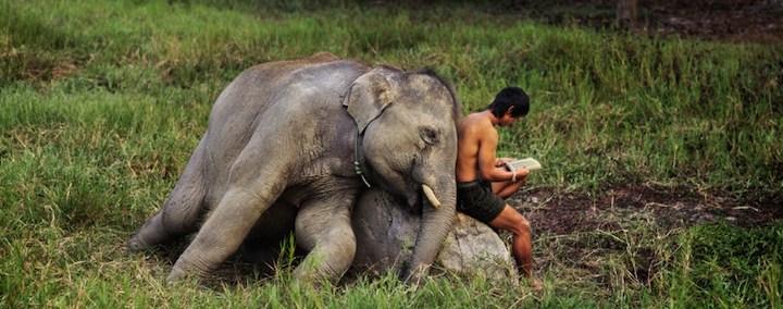 elephant-consciousness