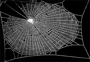 normal-spider-web